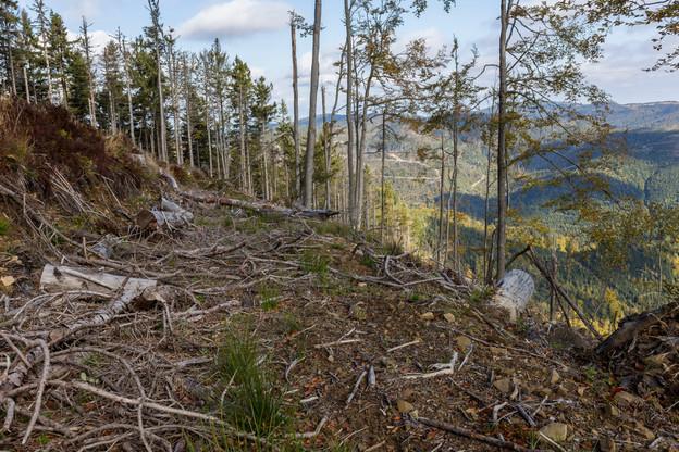À l'image de cette déforestation dans les Carpates, la nature en Europe continue de souffrir de la surconsommation. (Photo: Shutterstock)