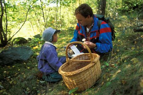 Dans les forêts humides de l'automne luxembourgeois, ramasser de bons champignons est une activité physique saine et gourmande! (Photo: Alamy Stock Pictures)