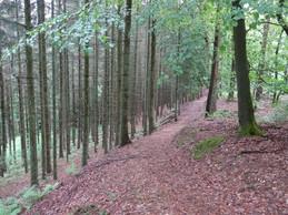 Vue du sentier de randonnéeN4. ((Photo: Mullerthal.lu))
