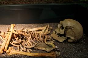 Le squelette de Loschi, au premier étage du musée. ((Photo: Matic Zorman / Maison Moderne))