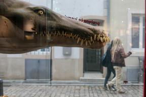 Les dents de ce pliosaure ont été retrouvées en France, près de la frontière luxembourgeoise. ((Photo: Matic Zorman / Maison Moderne))
