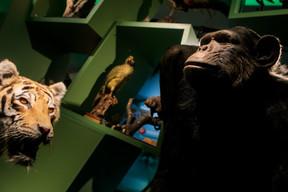 Les animaux exotiques naturalisés viennent aujourd'hui de zoos partenaires. À l'époque, les personnes les plus aisées les rapportaient de voyage et en faisaient don aux musées. ((Photo: Matic Zorman / Maison Moderne))