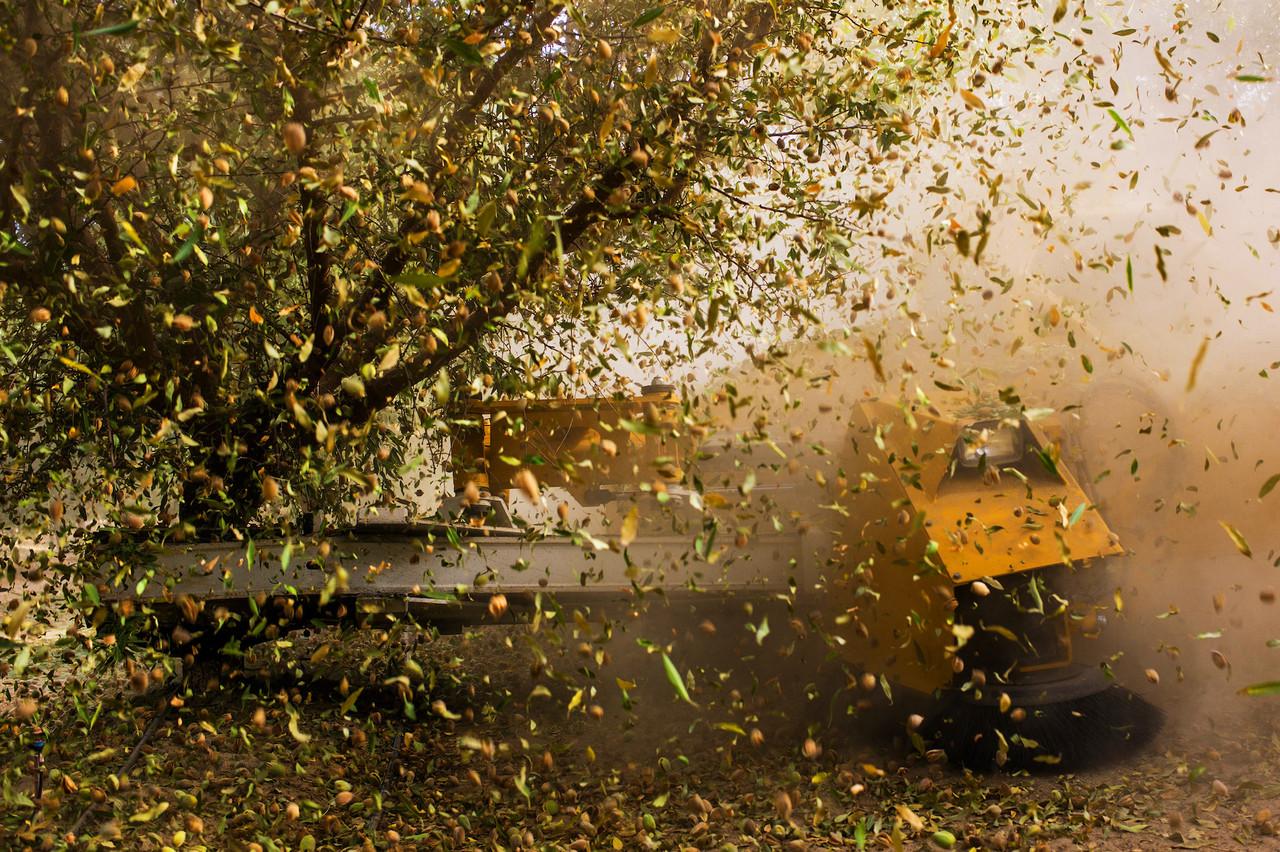 Alors que le reste de la région est devenu un désert, la Californie fournit 82% de la production mondiale des amandes. Mais cela à grand renfort d'irrigation artificielle. (Photo: Uwe H. Martin & Frauke Huber)