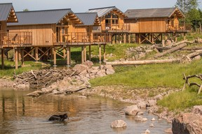 Lodges on stilts facing the bears Photo: Morgane Bricard