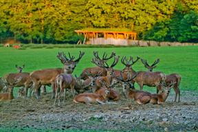 And deer  Photo: Morgane Bricard