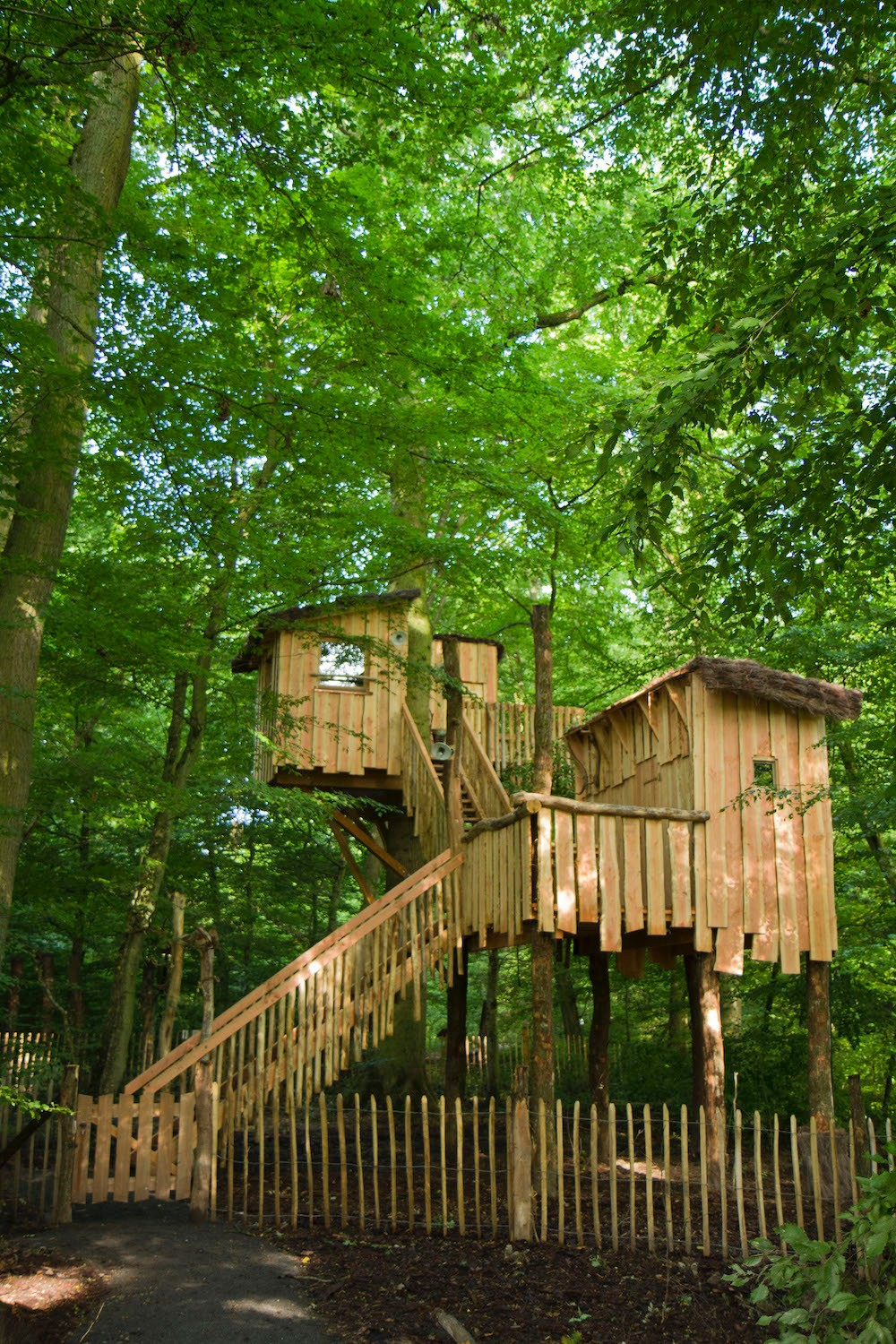 The site also has five treehouses  Photo: Morgane Bricard