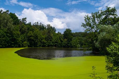 Les cyanobactéries, ou «algues bleues», prolifèrent davantage dans les eaux stagnantes, riches en nutriments, et lors de périodes de fort ensoleillement. (Photo: Shutterstock)