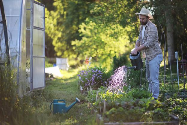 La manière dont vous arrosez vos plantes peut également éviter le gaspillage: arrosez le sol, pas les feuilles; arrosez autour des plantes, mais laissez le sol environnant sec. (Photo: Shutterstock)