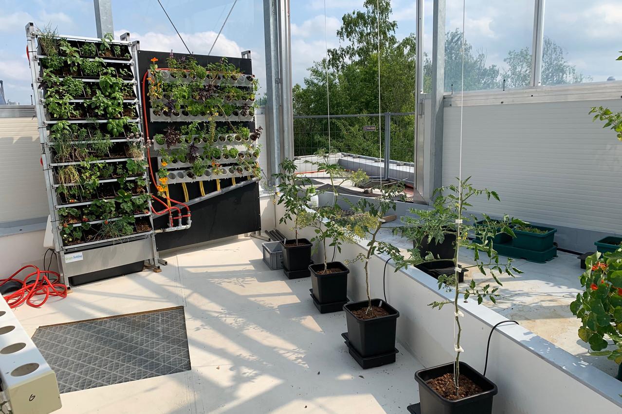 Plusieurs techniques de culture sont actuellement testées dans cette serre de toit de 60m2. (Photo: Paperjam)