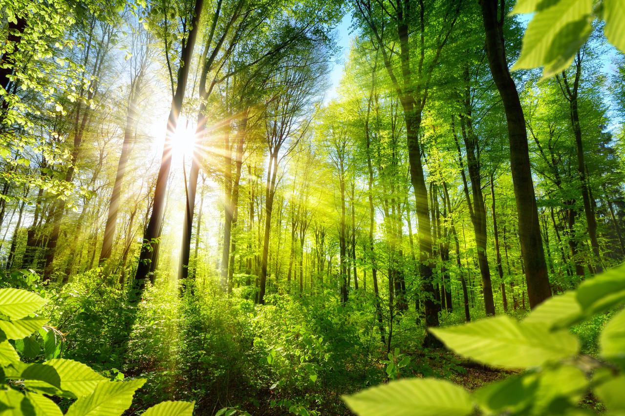 Les forêts européennes et les produits dérivés de la forêt peuvent compenser 20% des émissions de CO2 de toute l'UE. (Photo: Shutterstock)
