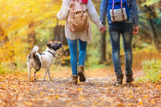 Une balade dans les bois? Oui, mais en gardant ses distances. (Photo: Shutterstock)