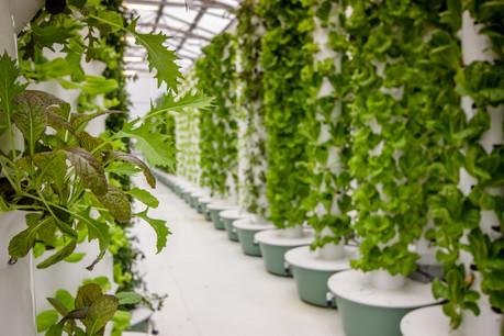 À partir de l'aéroponie, des technologies développées par la Nasa dans les années1960, un ingénieur en robotique veut produire des fruits et légumes dans des fermes verticales depuis l'espace. Il est un des cinq lauréats de Fit4Start. (Photo: Shutterstock)