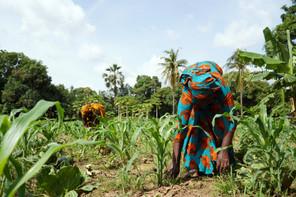 Pour remplir sa mission, SOS Faim agit pour la transformation des systèmes agricoles et alimentaires en finançant et en accompagnant des acteurs engagés en faveur de l'agriculture familiale durable et de la consommation alimentaire responsable. (Photo: Shutterstock)