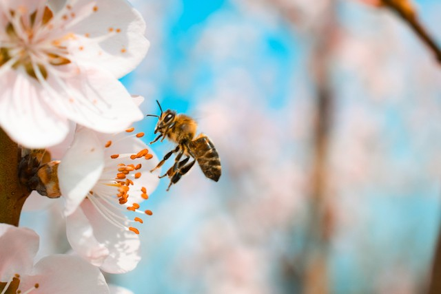 """Bavaria has adopted a series of measures to """"save the bees"""" that may revolutionise farming practice across the country Shutterstock"""