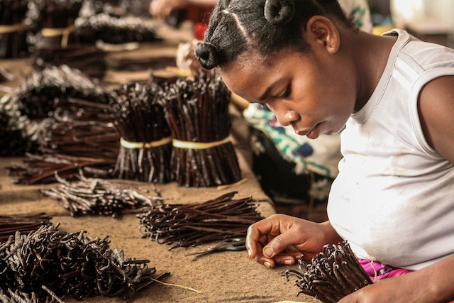 A Malagasy worker processing vanilla in Sambava, Madagascar. The island's unique ecology prompted scientists to call it the eighth continent of the world. Shutterstock