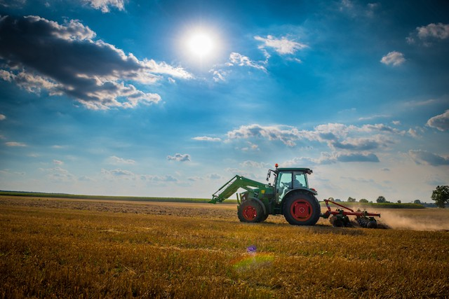 More than half the EU's cereals and oilseed crops are fed to animals Shutterstock
