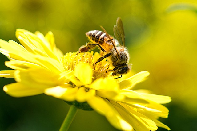 Honeybees can learn to add and subtract, new research suggests Shutterstock