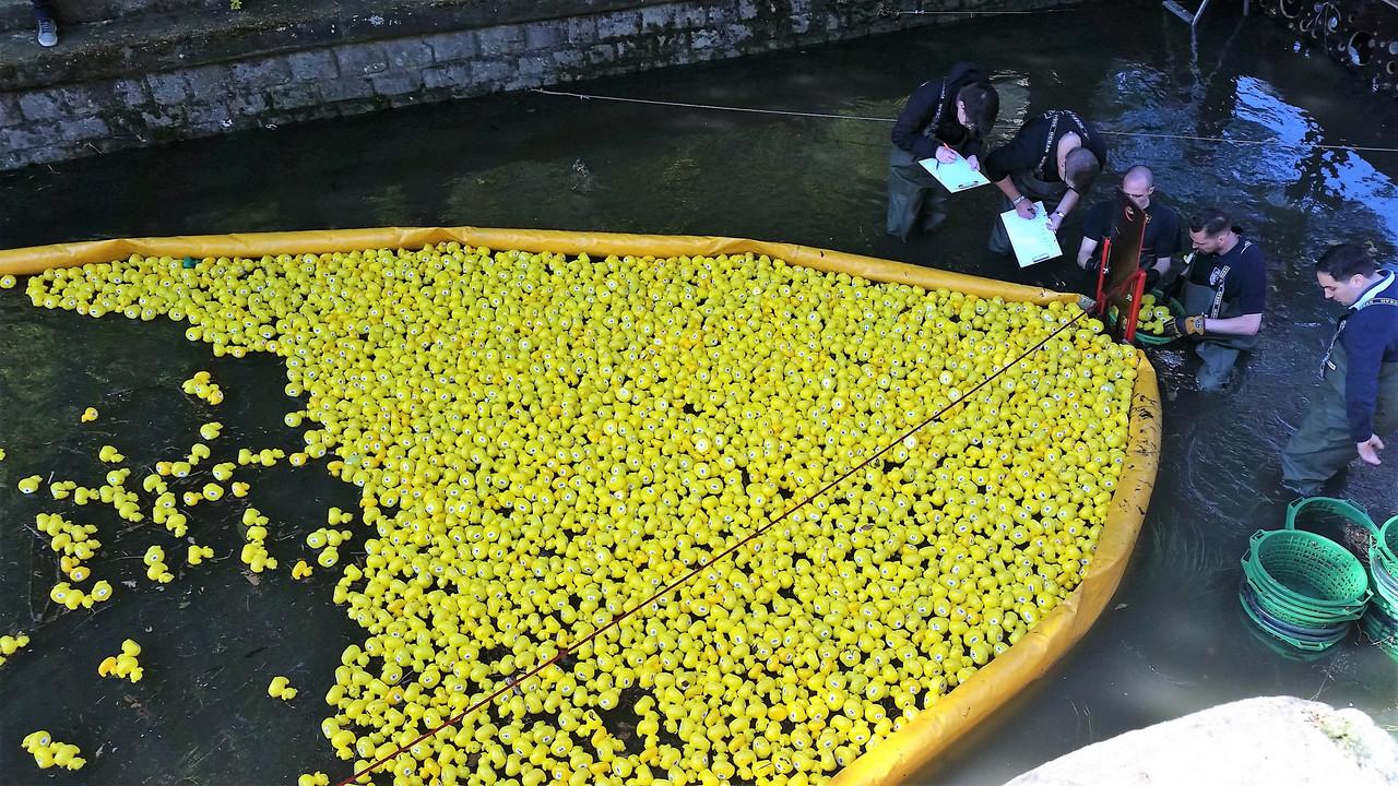 Lors de la Duck Race, un notaire est présent, les pieds dans l'eau, pour officialiser les résultats. (Photo: Table Ronde Luxembourgeoise)