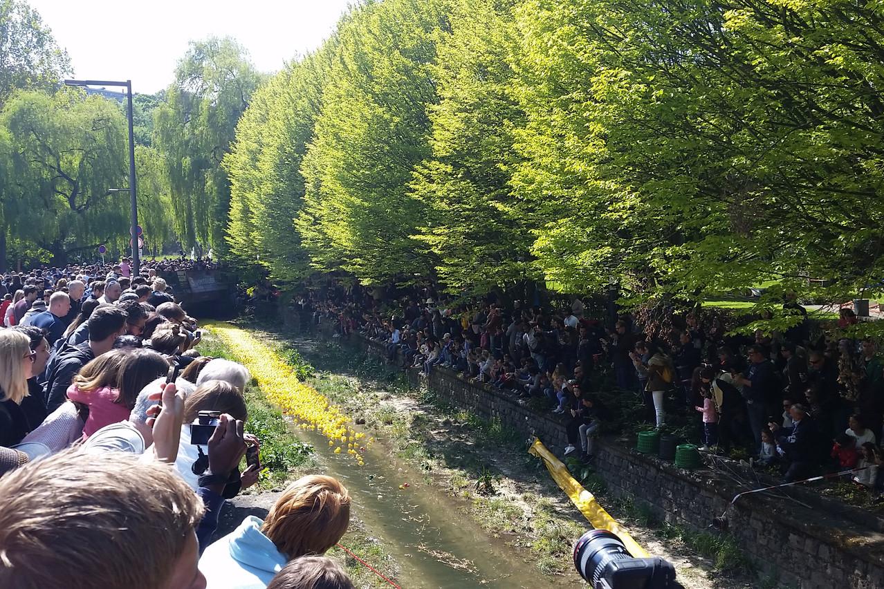 16.000 canards en plastique vont dévaler le fleuve de la Péitruss sur une distance de 500 mètres.  (Photo: Table Ronde Luxembourgeoise)