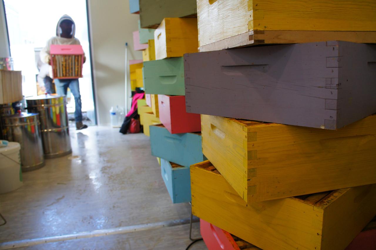 L'assistant de Monsieur Zeler, David, empile des supers dans la chambre à miel. (Photo: Delano)