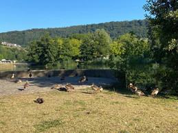 Dans la quiétude du petit matin, les canards se reposent. ((Photo: Paperjam))