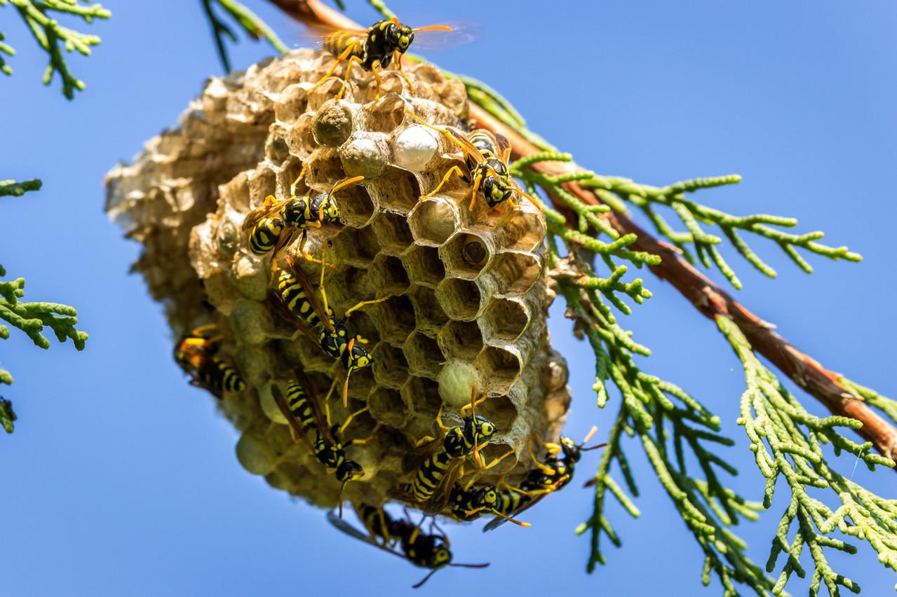 En tolérant les nids dans les endroits non problématiques, on rend un grand service à soi-même et à la nature. (Photo: Shutterstock)