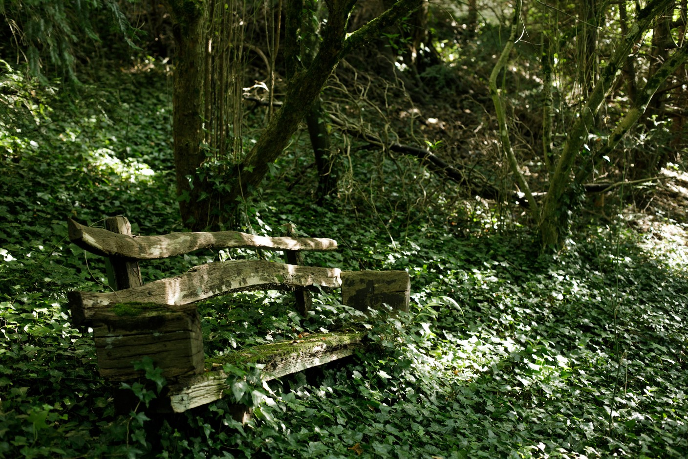 An old bench in the garden behind the building Matic Zorman / Maison Moderne