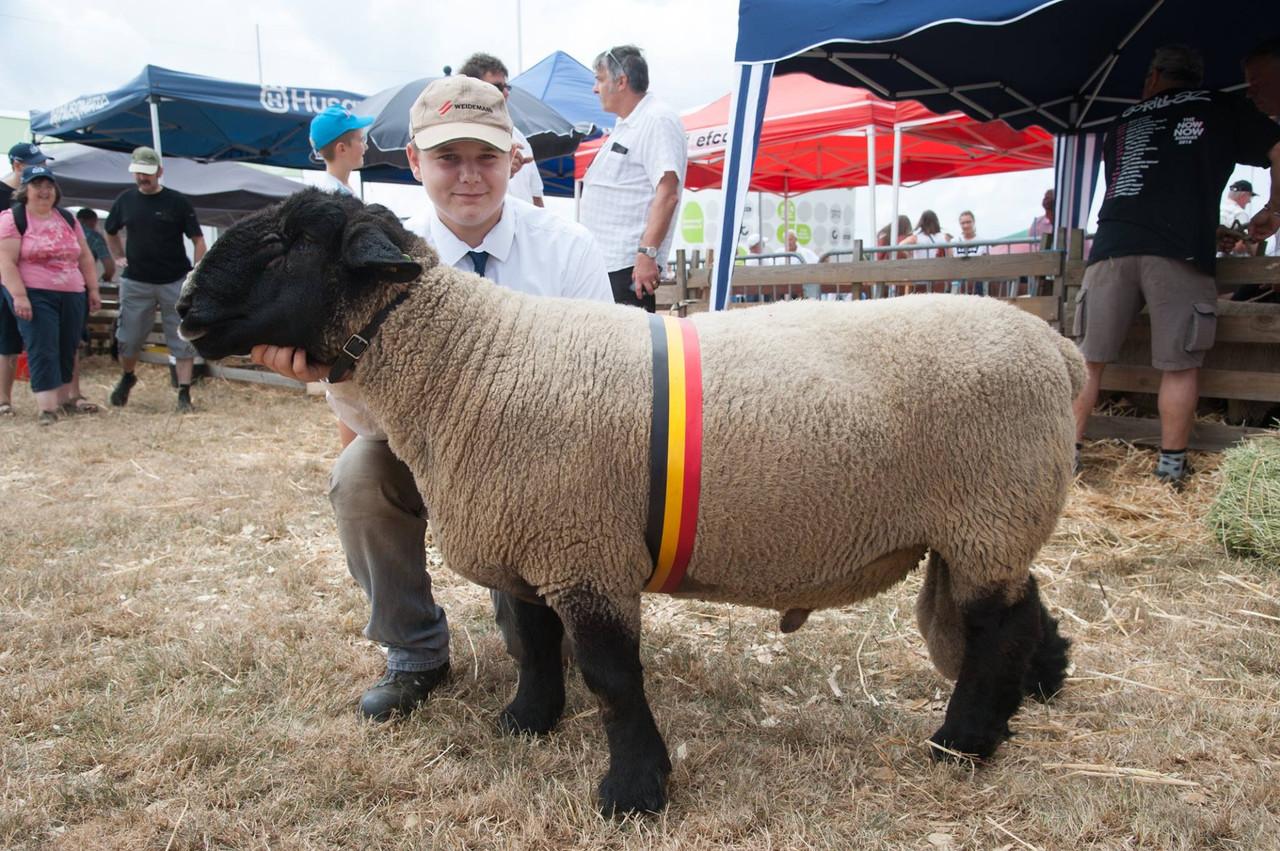 Des concours autour des moutons, vaches, taureaux... Les animaux seront à l'honneur tout le week-end. (Photo: Foire de Libramont)