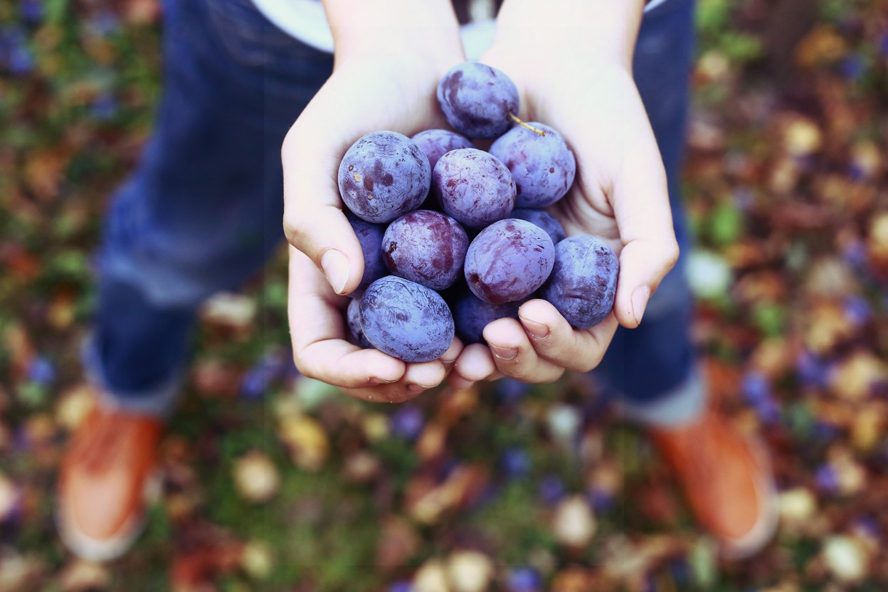 Soon you won't have to own land to go fruit picking in Luxembourg Shutterstock