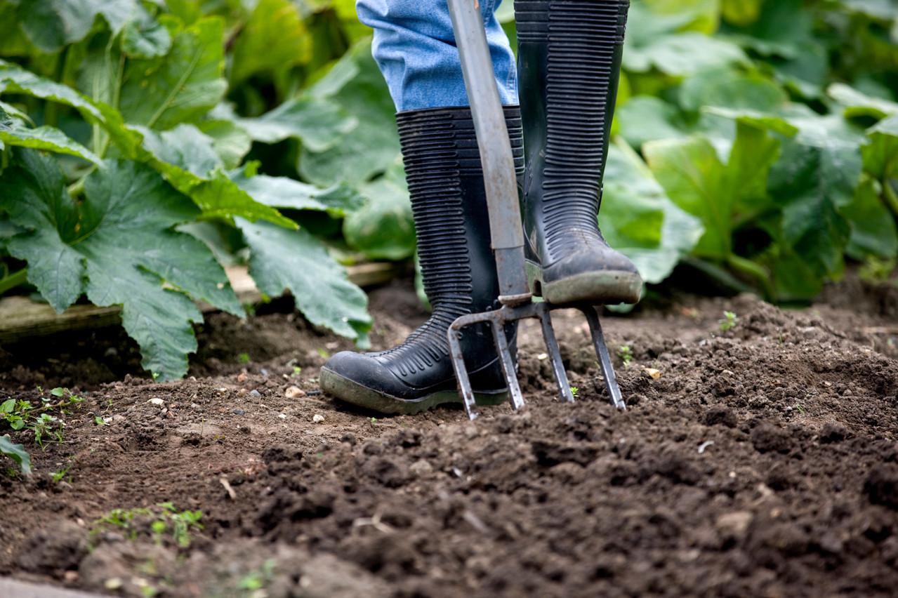 Gardening tips Photo, Shutterstock