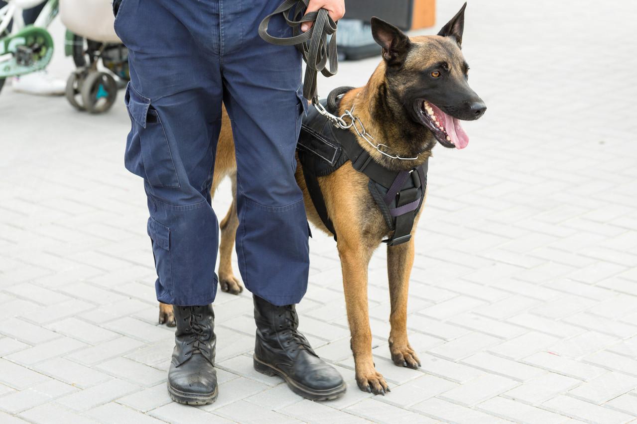Les agents de sécurité dans le quartier Gare pourraient poursuivre leur mission au-delà du 31 janvier… en attendant que l'effectif policier se renforce. (Photo: Shutterstock)