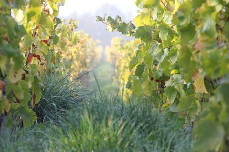 Le produit des vignes du domaine Coessens est désormais accessible au Luxembourg grâce à Craft & Compagnie. (Photo: DR)