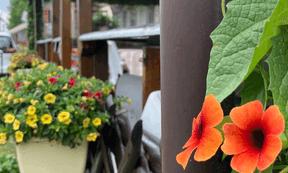 Partout, des balcons fleuris, signe que les touristes ne sont pas que de passage. ((Photo: Paperjam))