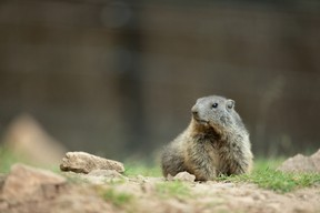 Près de 650 animaux issus de l'Europe y évoluent dans leur milieu naturel. ((Photo: Domaine des grottes de Han))