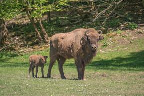 Le parc prévoit une durée de trois heures pour une visite à pied. La visite en safari-car est d'une durée de 1h30. ((Photo: Domaine des grottes de Han))