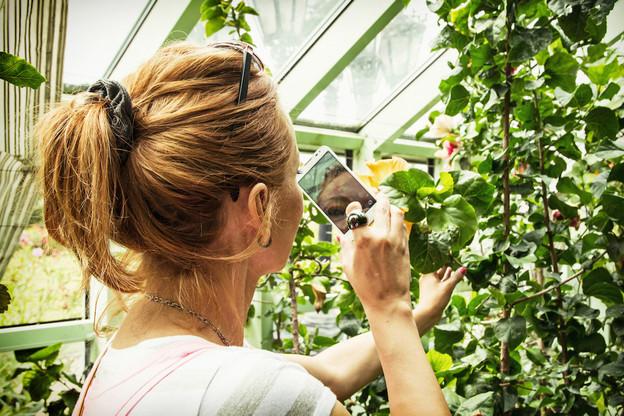 Semer, repiquer, planter, arroser: l'application Groww vous donne des conseils de jardinage et propose une base de données de plus de 1.500 fiches de culture, du potager au jardin ornemental, pour choisir ses plantes. (Photo: Shutterstock)