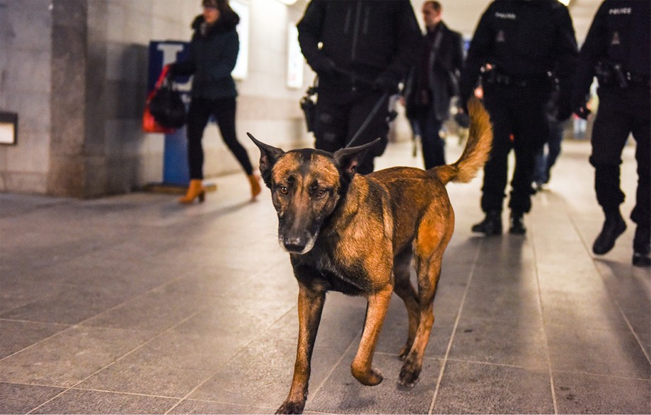What training is required to work with a dog? The Luxembourg police explains their protocol. (Photo: Grand Ducal Police)