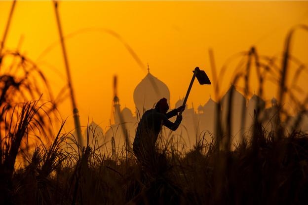 Ibisa, start-up qui allie les données de la Terre vue du ciel et la blockchain, permet d'offrir une assurance aux agriculteurs les plus démunis de la planète. (Photo: Shutterstock)