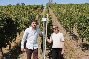 Une virée gourmande dans les vignes avec Georges et Isabelle Gales permet de se rendre compte du caractère exceptionnel que devrait revêtir le cru 2020… (Romain Gamba/Maison Moderne)