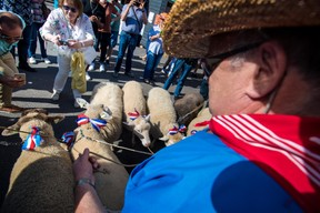 Procession des moutons ((Photo: Nader Ghavami))