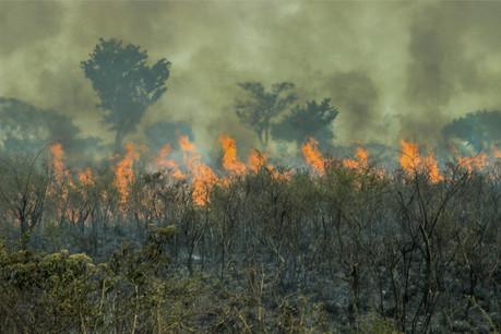 Le CDP et BNPP AM veulent sensibiliser les entreprises et les institutions financières aux risques liés à la biodiversité et susciter une meilleure transparence des données. (Photo: Shutterstock)