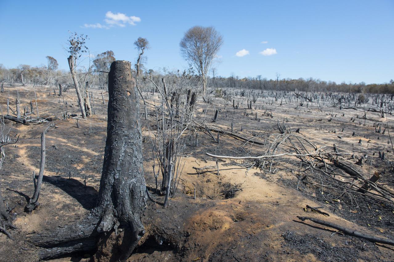Les investisseurs se méfient des entreprises liées de près ou de loin à la déforestation. (Photo: Shutterstock)