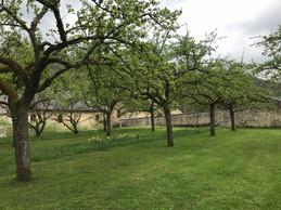Le jardin abrite de nombreux espaces d'arbres fruitiers, dont des pommiers. ((photo: Paperjam))