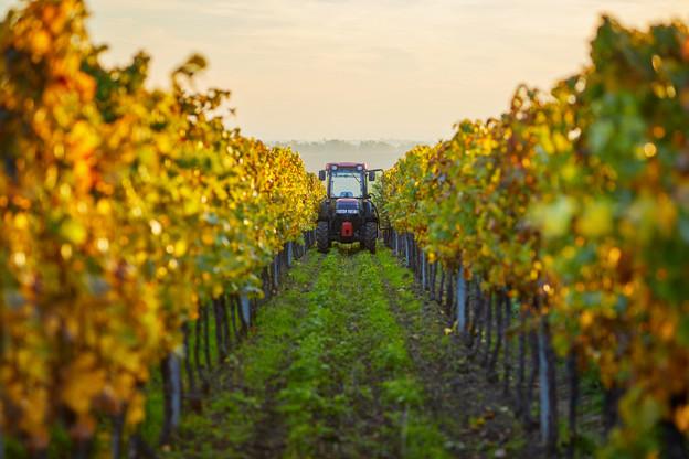 Le secteur de la viticulture connaît des pics de travail saisonniers au cours de l'année. La législation en tiendra compte. (Photo: Shutterstock)