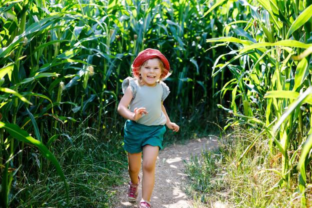 Le labyrinthe de maïs, qui existe depuis vingt ans, s'étend sur un champ de plus de 2,5hectares. Et pour ceux qui s'y sont déjà essayés, le parcours est modifié tous les ans donc impossible de tricher. (Photo: Shutterstock)