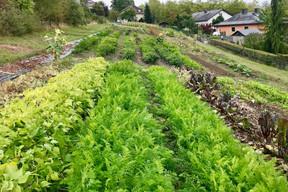 Lët'z Grow fait pousser des légumes le plus naturellement possible à Junglinster. (Maison Moderne)