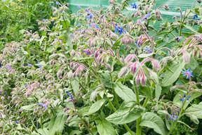 Dans le jardinLët'z Grow: des fleurs comestibles. (Maison Moderne)