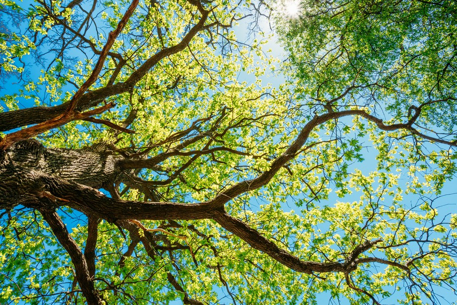 Do you have a favourite tree in the capital? Take a snap and your photo could be printed by the City Shutterstock