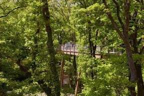 Le chemin des Cimes est d'une longueur de1.250 mètres et de 3 à 23 mètres de haut.  ((Photo: Baumwipfelpfad Saarschleife))
