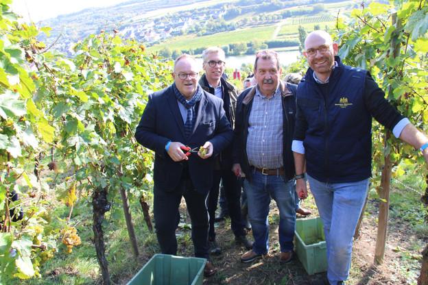 Romain Schneider a participé aux vendanges en compagnie de Léon Gloden, bourgmestre de Grevenmacher, Erny Schumacher, de l'Organisation professionnelle des vignerons indépendants, etd'Antoine Clasen, de Bernard-Massard. (Photo: SIP)